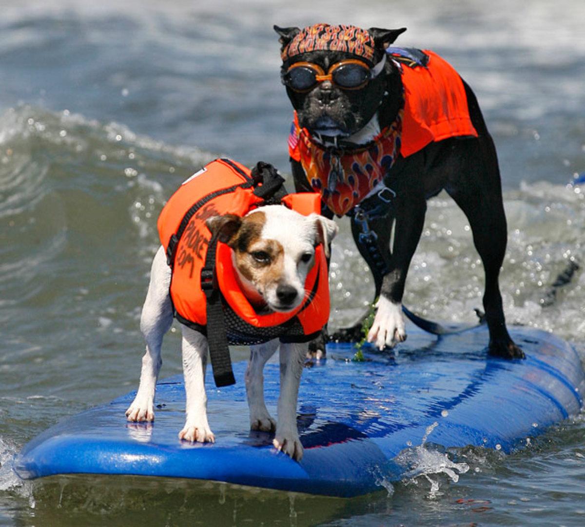 two-dogs-one-board.jpg