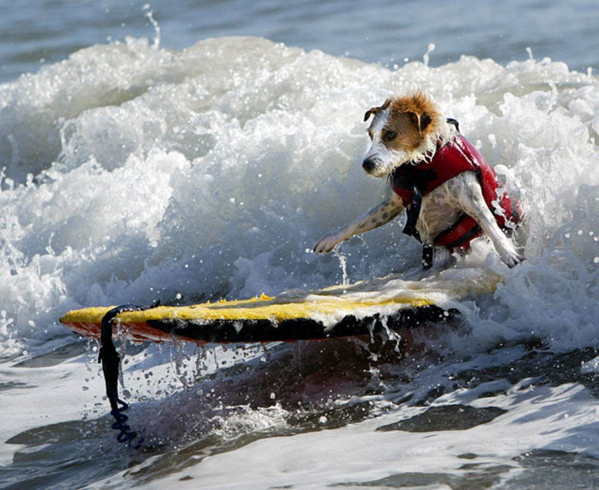 wet-surf-dog.jpg