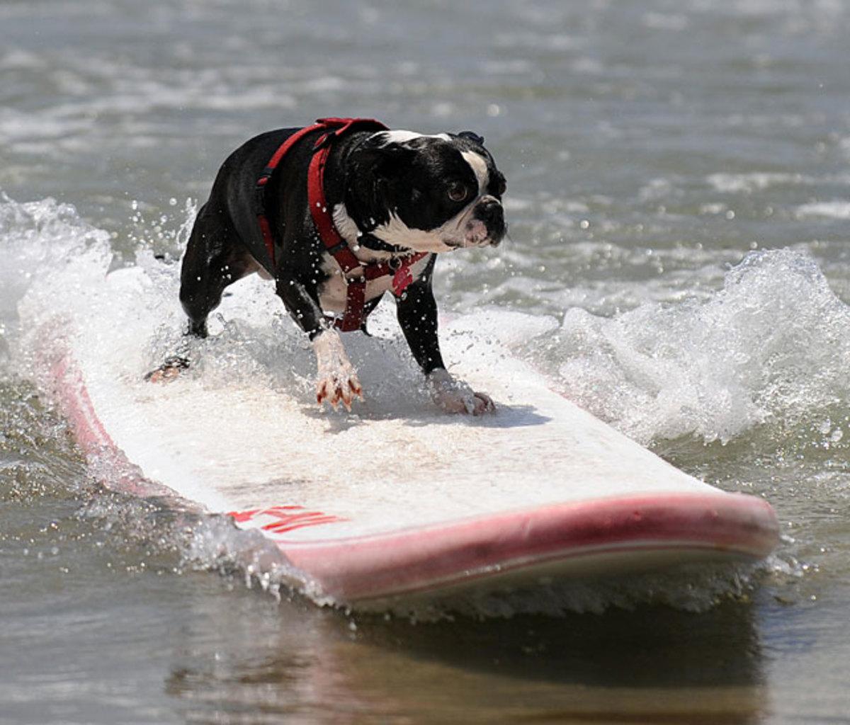 small-dog.jpg