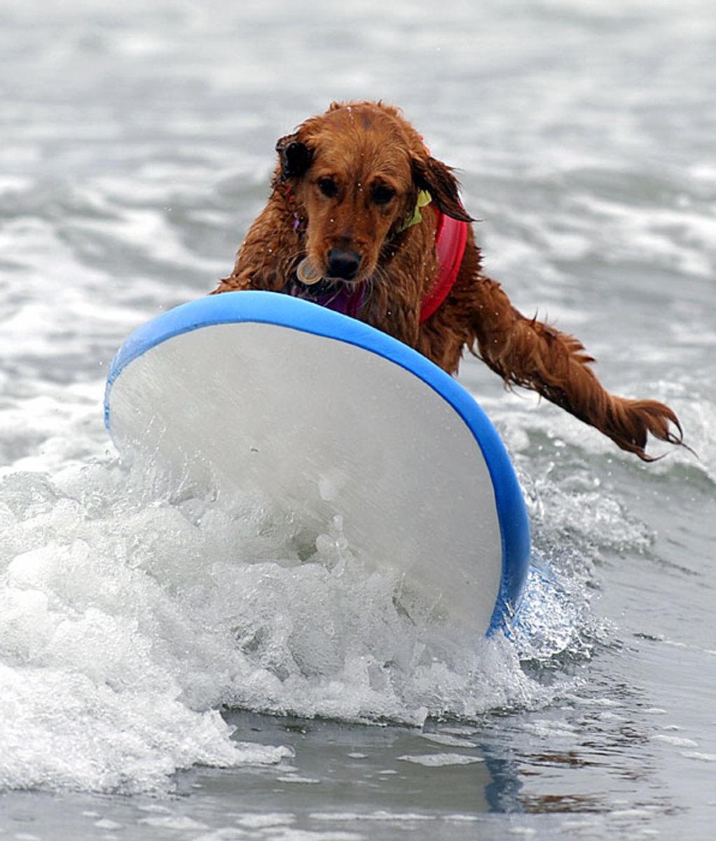 brown-dog.jpg