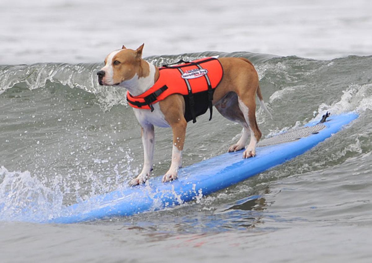 surf-dog-focus.jpg