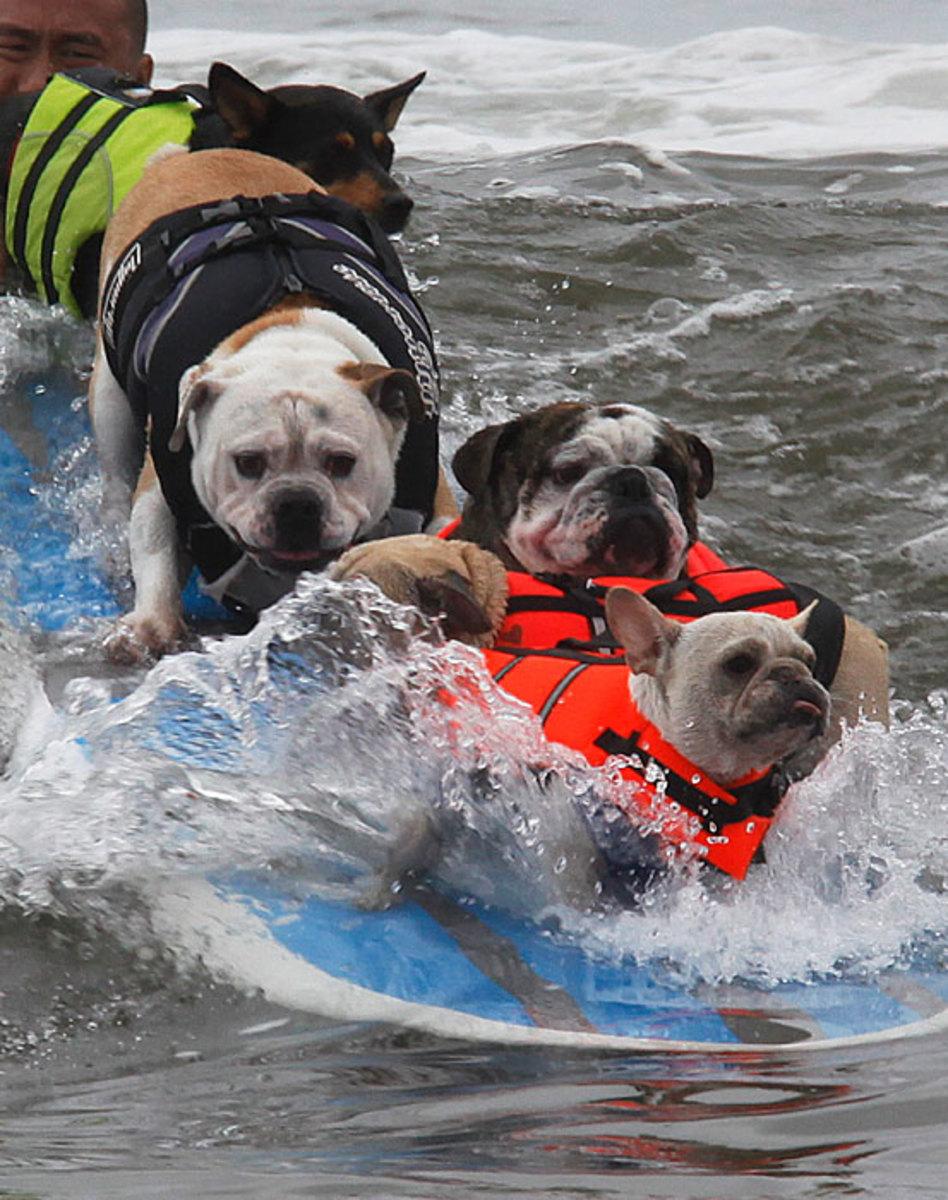 dog-overload.jpg
