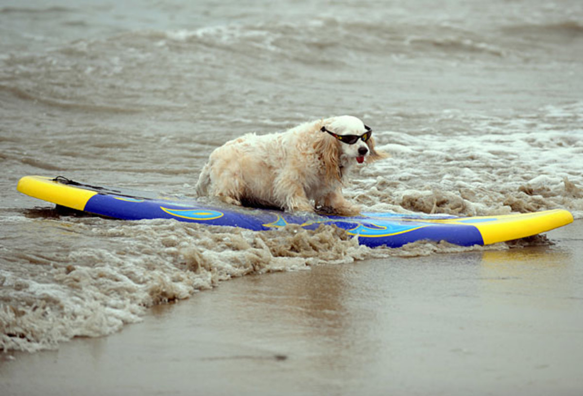 dog-surf.jpg