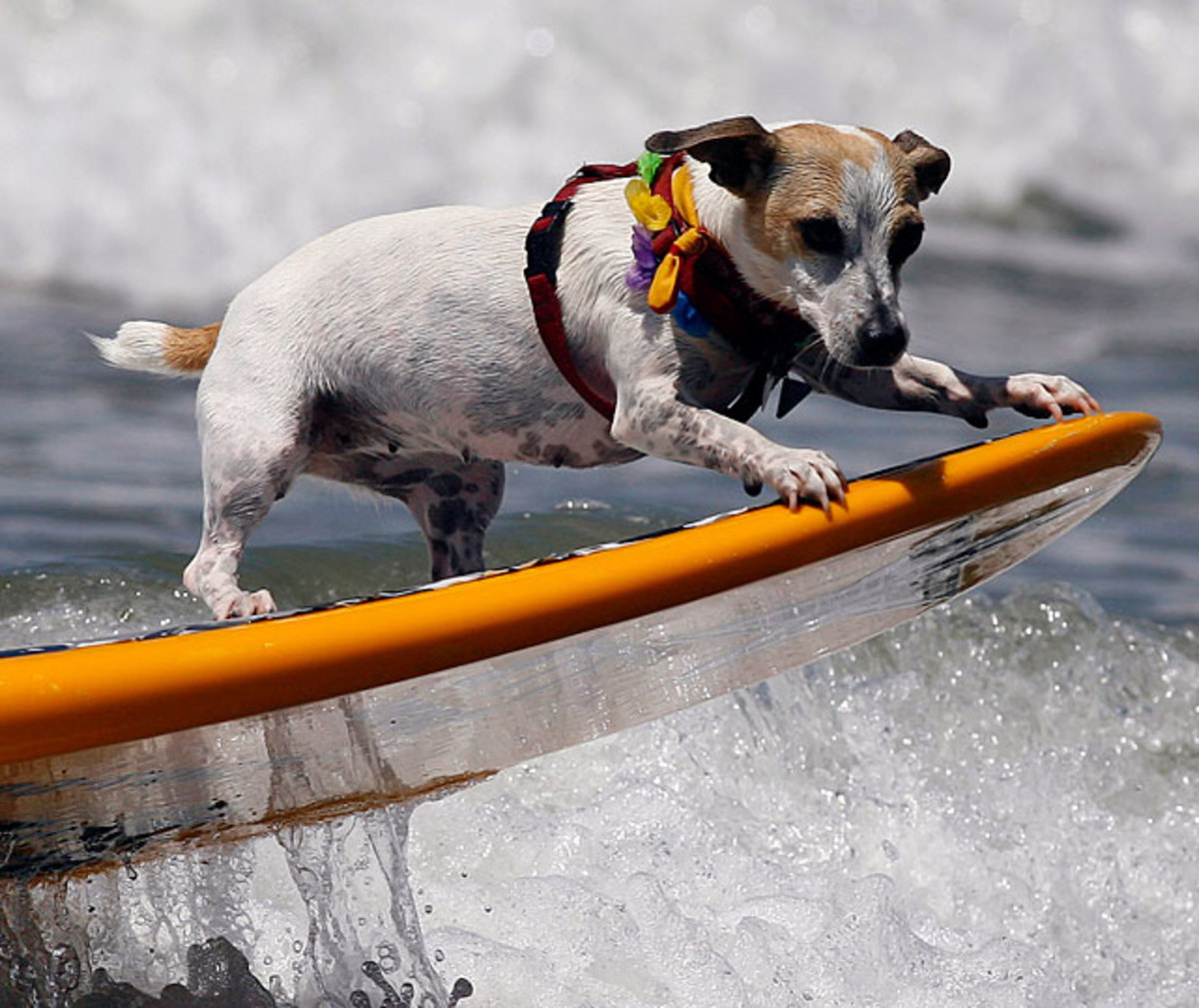 2-dog-top.jpg
