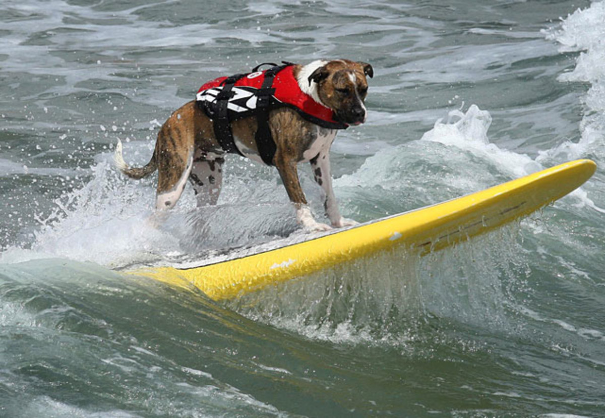 dog-happy.jpg
