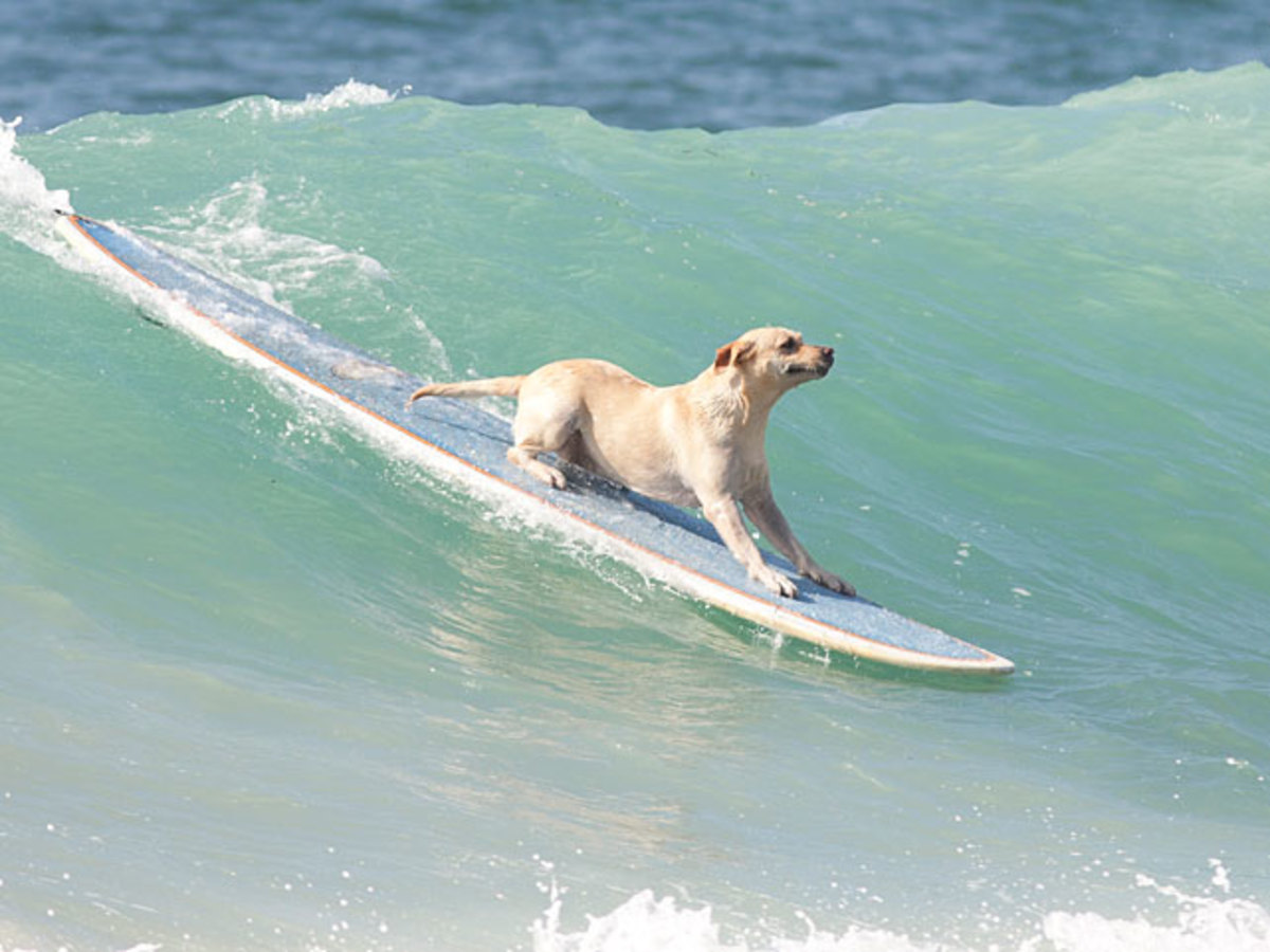small-dog-big-wave.jpg