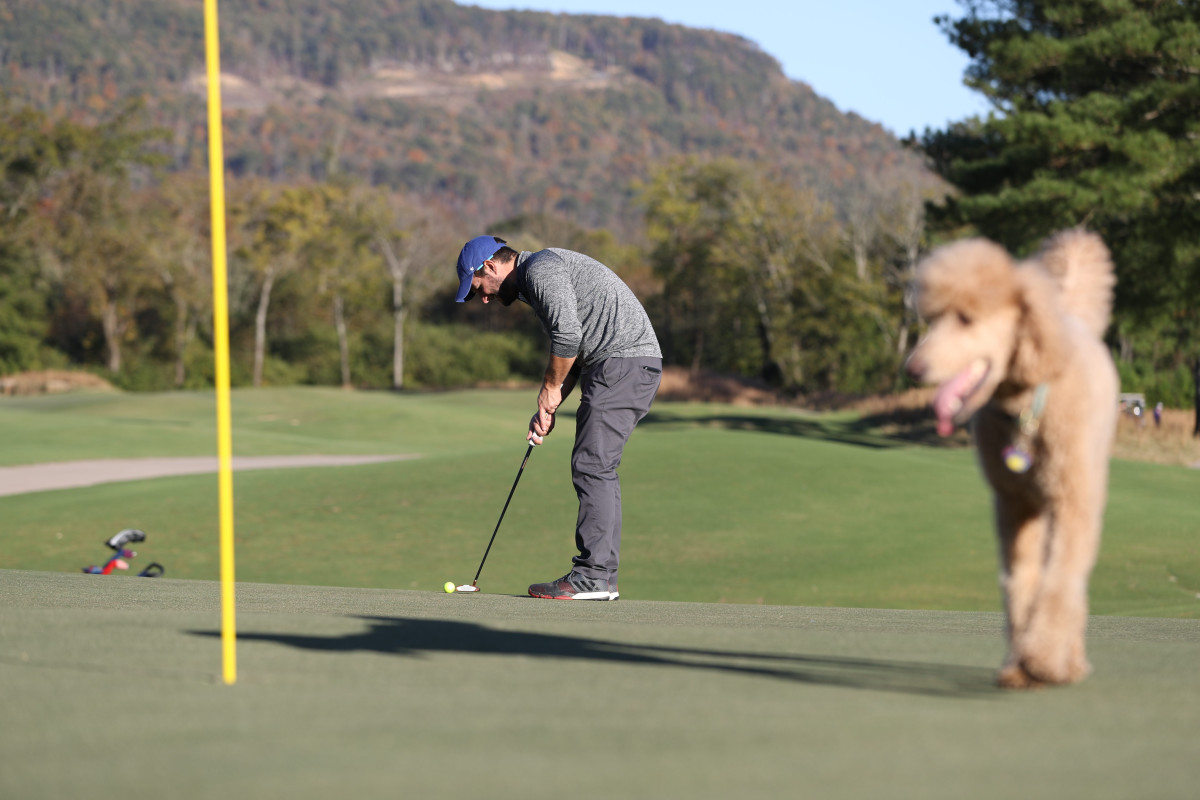 On a typical day at Sweetens Cove you might see a pooch as a playing partner. (photograph by Simon Bruty)