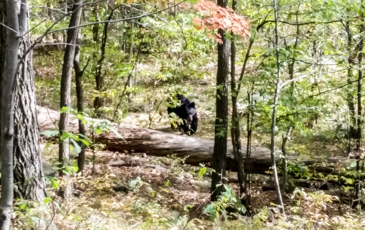 In Apshawa, Scott warned to stay away, but the other five hikers stuck around long enough to photograph the encroaching animal.